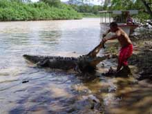 CrocodiletourCostaRica