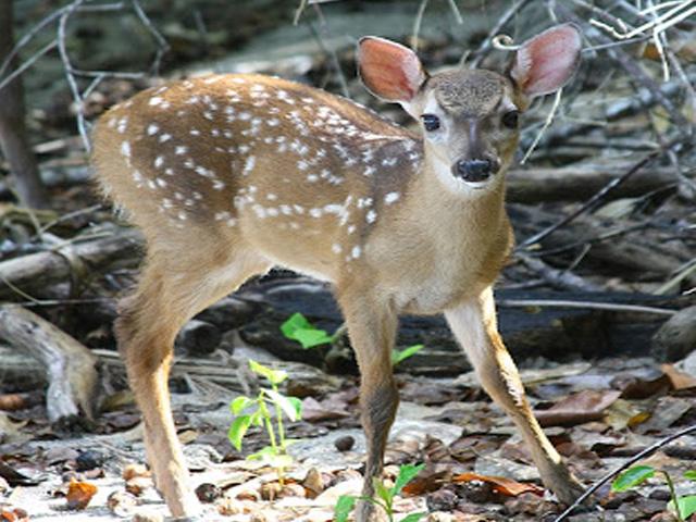Carara National Park Wild life