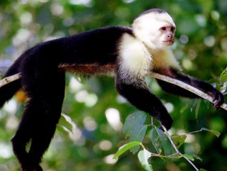 manuel antonio national park tour costa rica